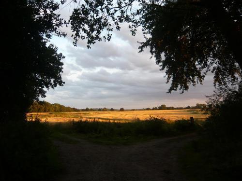 Sunset barley field